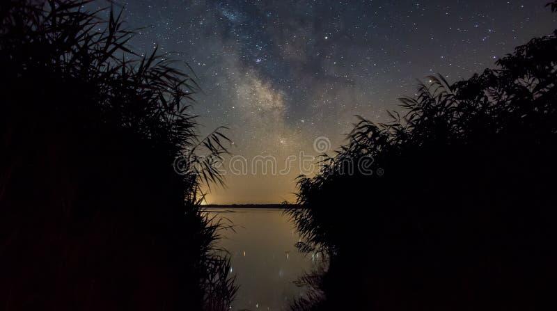 上升我们的在芦苇的星系 免版税图库摄影