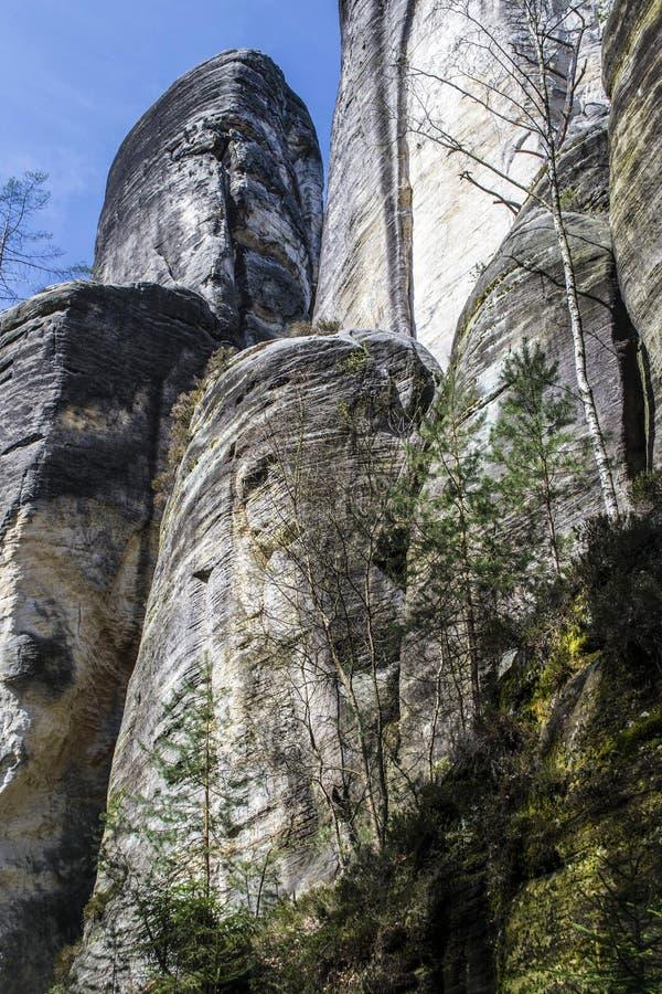 上升沿岩层的白桦 免版税库存图片