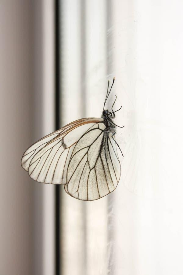 上升的事务的概念 一只蝴蝶 库存照片