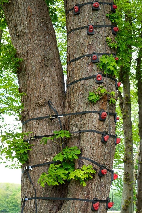 女孩被栓大树5年_上升的设备被栓对一棵大树
