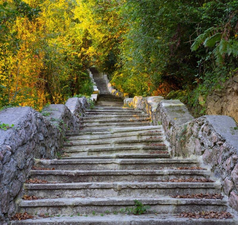 上升至森林, Ulia登上的老被放弃的台阶 免版税库存图片