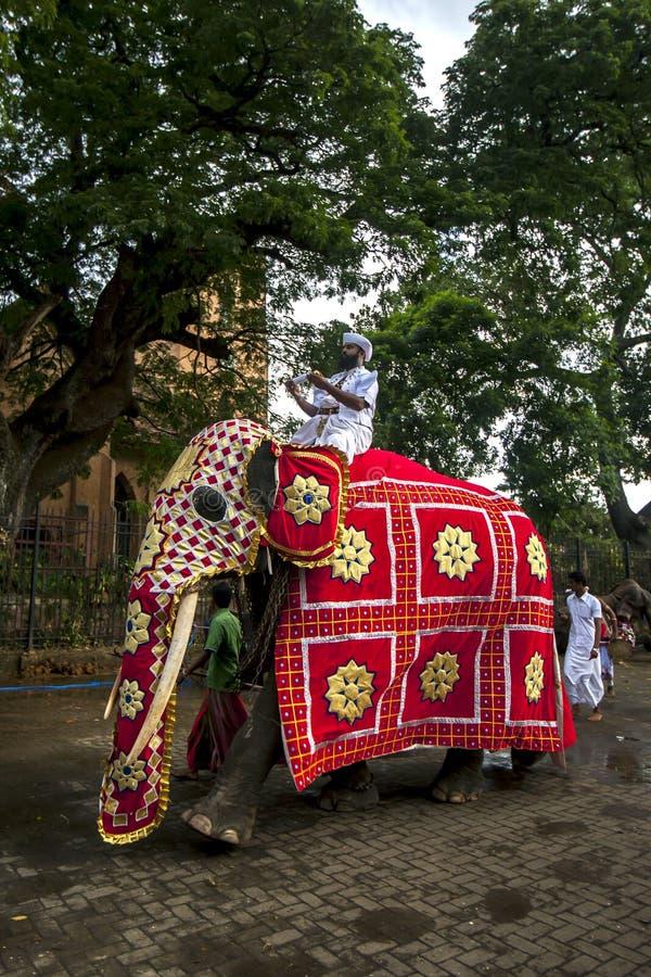 登上在他的tusker大象领先者或Peramununerala运载一个佛教宗教小箱 库存照片