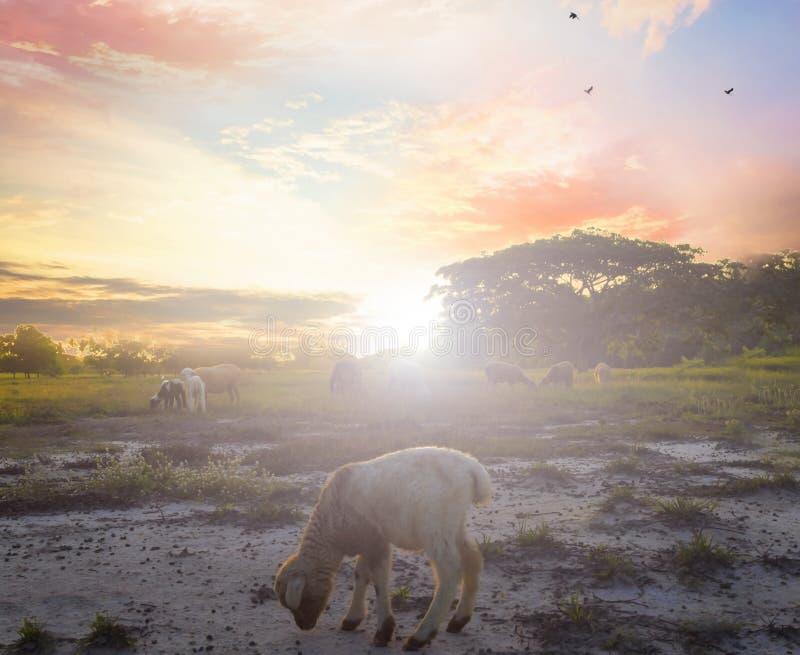 上帝羊羔的概念:在上帝前面十字架的羊羔  免版税库存图片
