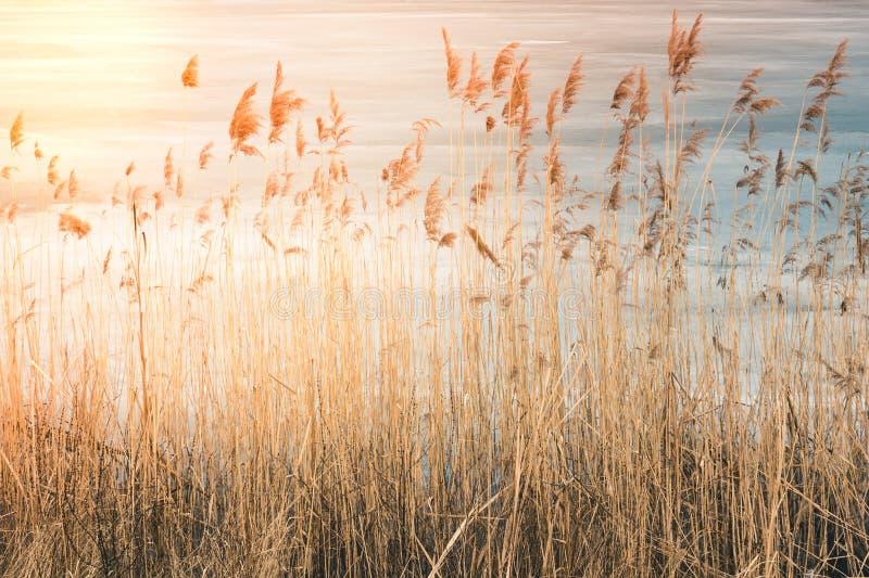 上流干草丛林在日落和阳光的,在后面 图库摄影