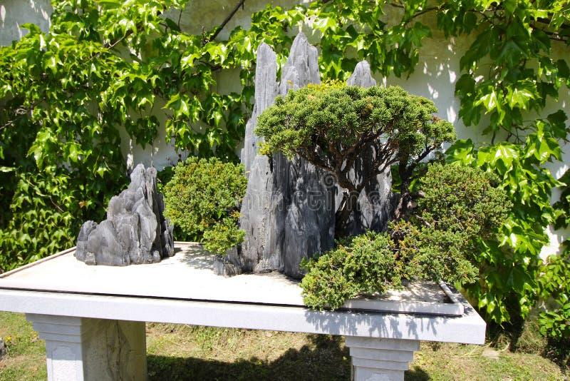上海园林中的盆栽树 免版税库存图片