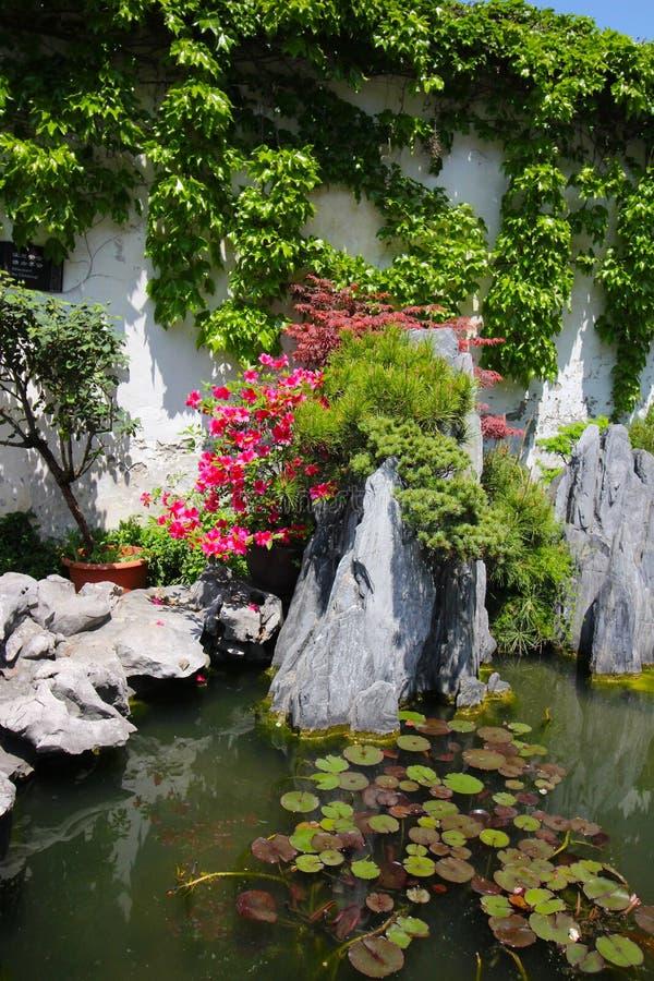 上海园林中的盆栽树 库存照片