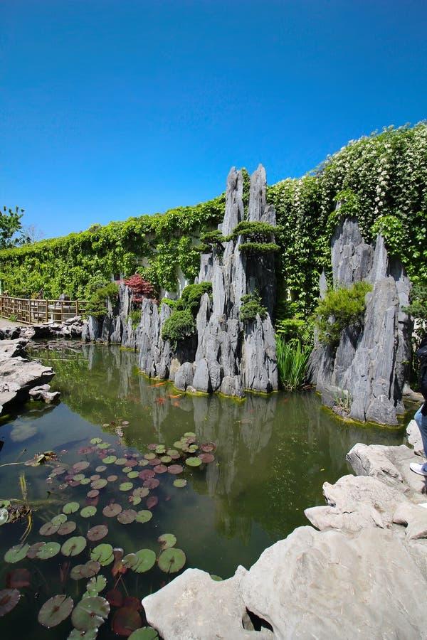 上海园林中的盆栽树 库存图片