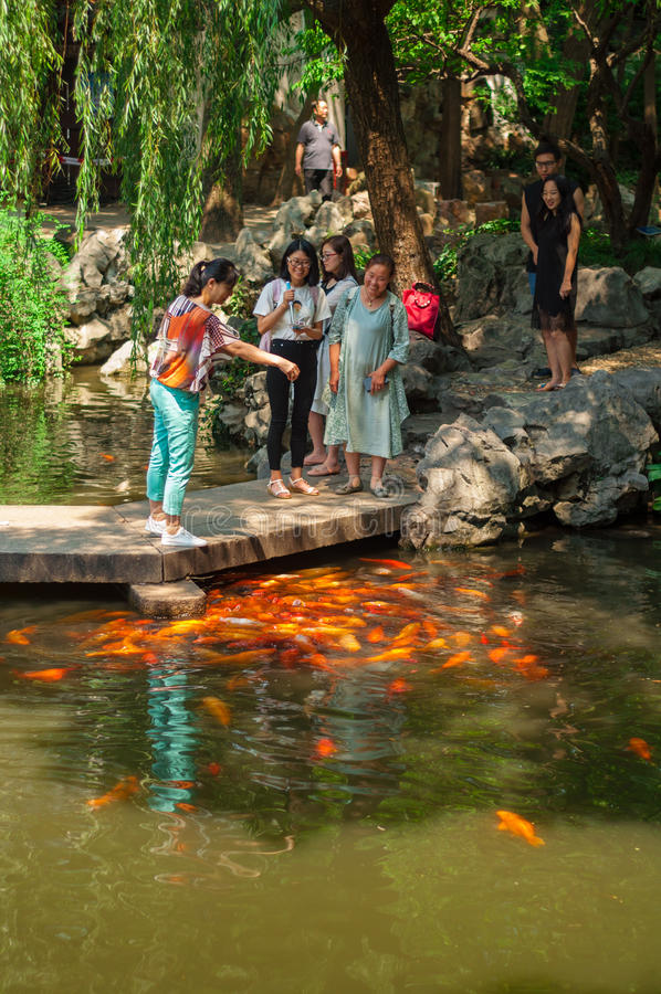 上海,中国- 2017年6月17日:人哺养的鲤鱼鱼  免版税图库摄影
