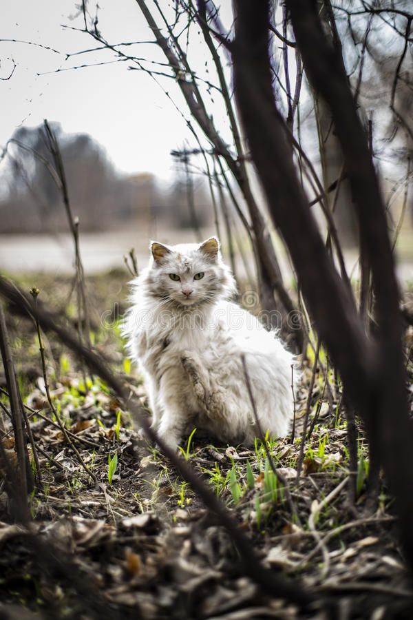 上的猫无家可归的照片街道 免版税图库摄影