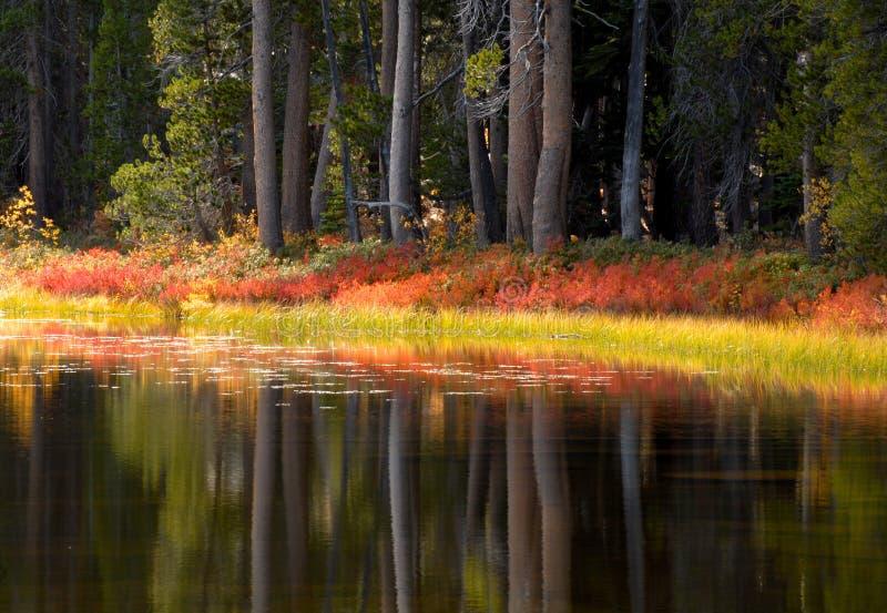 上色反射他们的结构树优胜美地的秋&# 库存照片