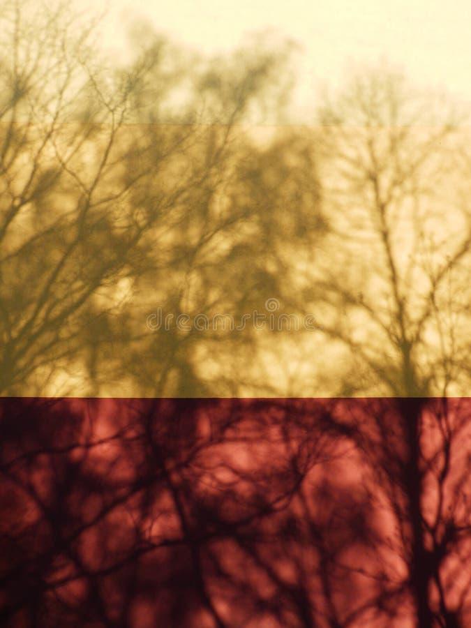 上色树阴影细节摄影在墙壁上的 免版税库存图片