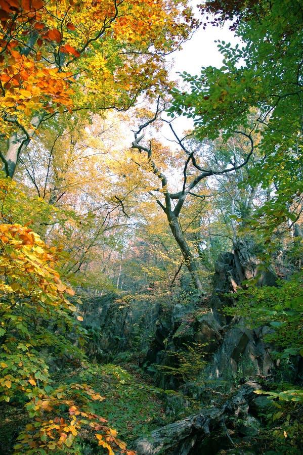 上色森林 库存图片