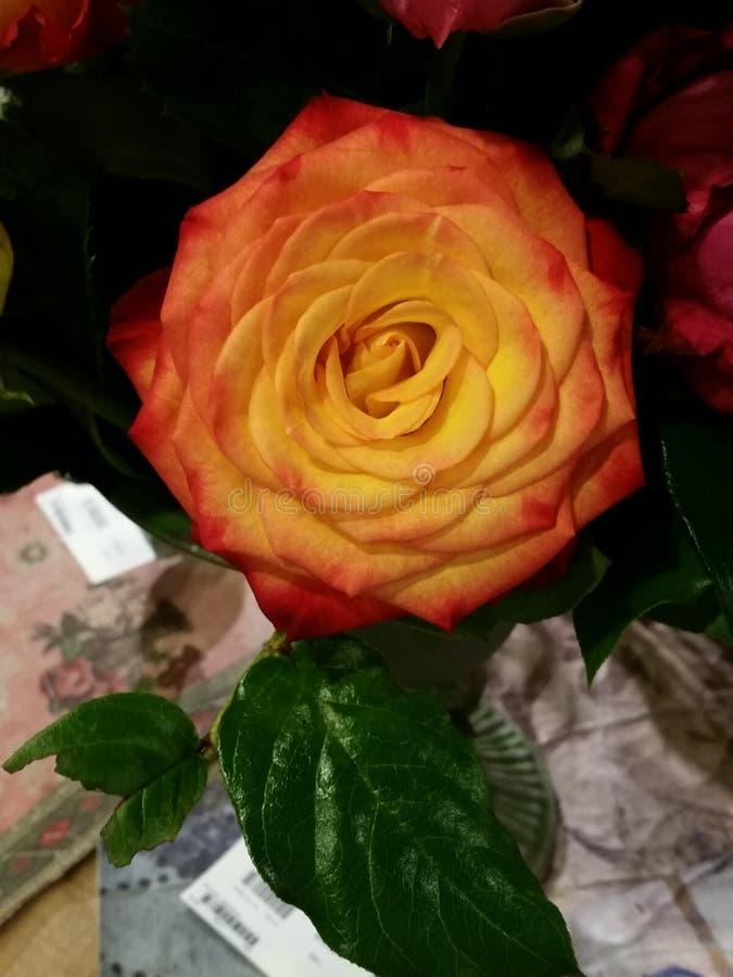 上色橙色热情上升了 库存图片