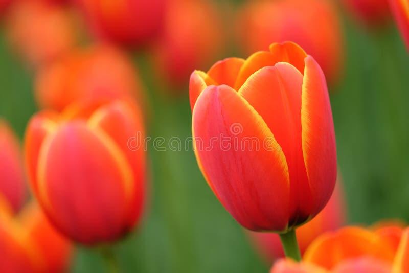 上色花园被团结 免版税图库摄影
