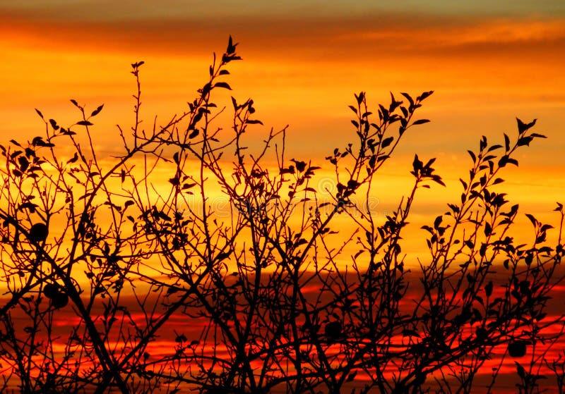 上色赤裸树枝秋季摄影在日落的 库存照片
