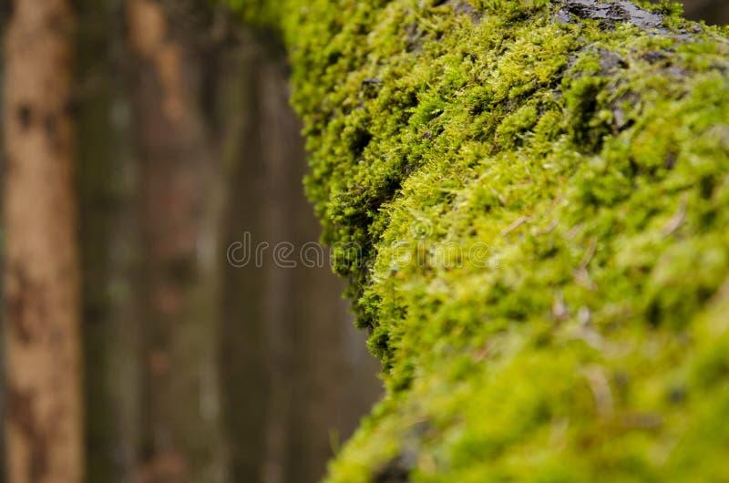 上色青苔结构树黄色 库存图片