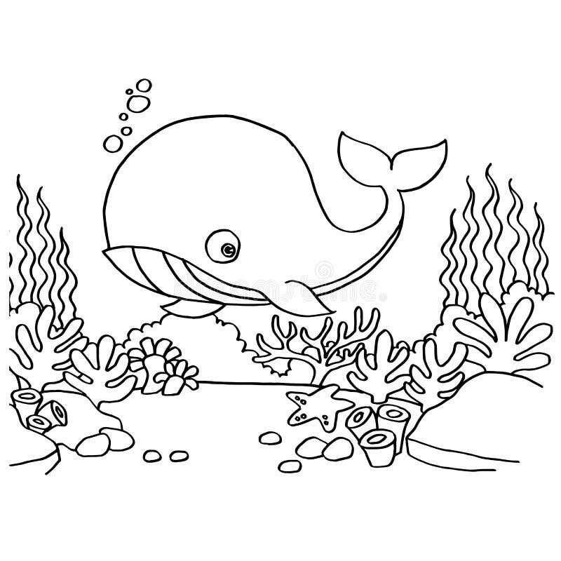 上色页传染媒介的鲸鱼 库存例证