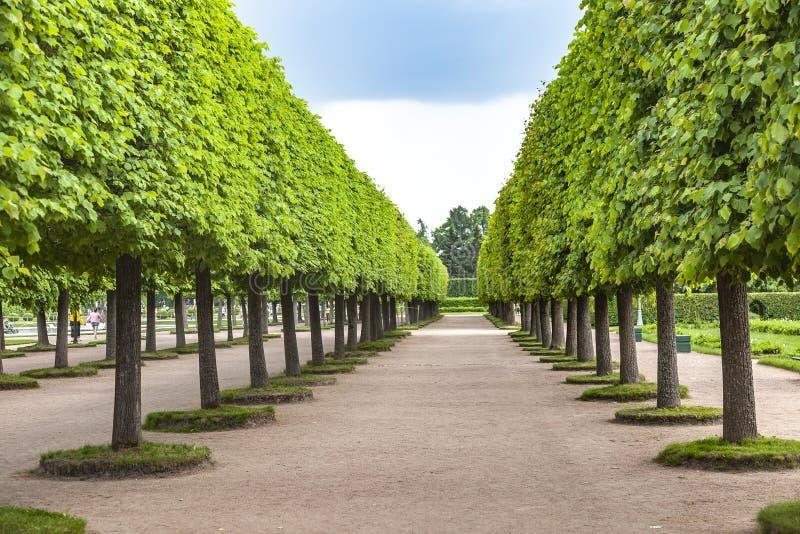 上部公园宫殿和公园复杂Peterhof 库存图片