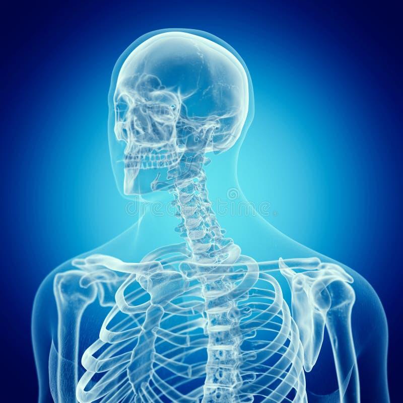上部脊椎 库存例证