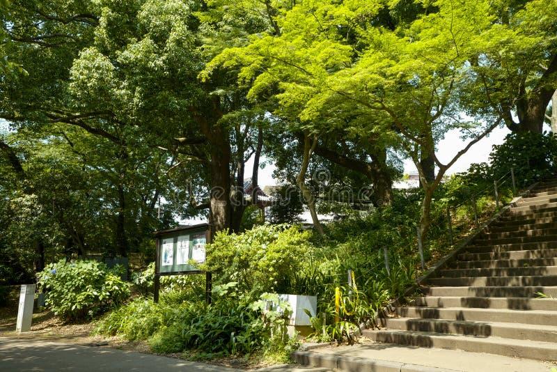 上野公园的看法 上野公园是一个宽敞公园在Taitō,东京上野区  库存图片