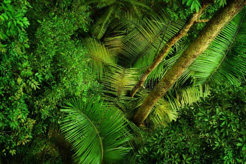 从上面的热带密集的森林 免版税库存图片