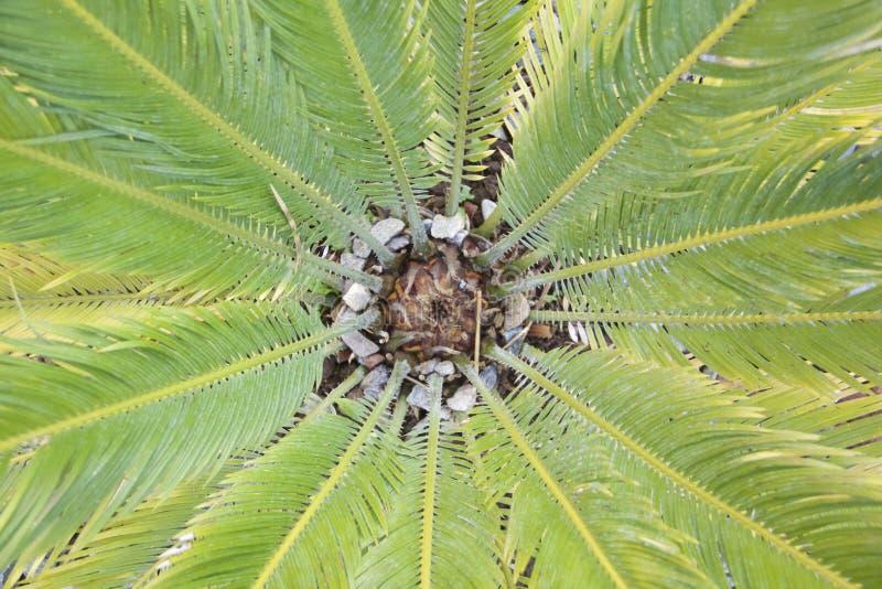 从上面的绿色棕榈树叶子 库存图片