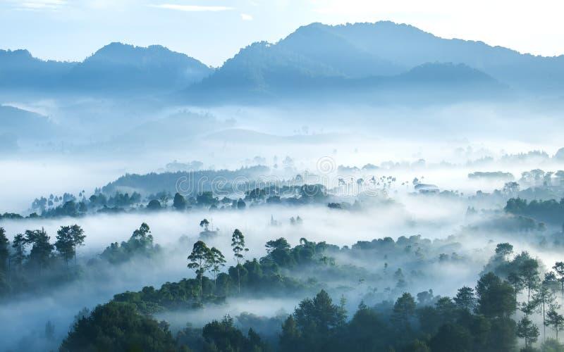 从上面看见的有薄雾的森林在早晨 库存照片