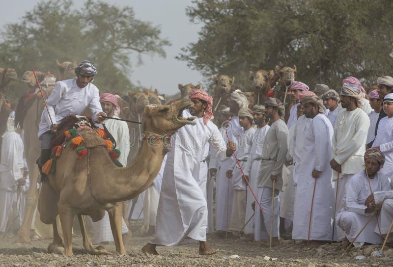 上骆驼的阿曼人开始种族 免版税库存照片