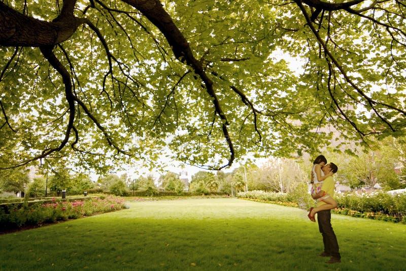 下亲吻结构树 库存照片