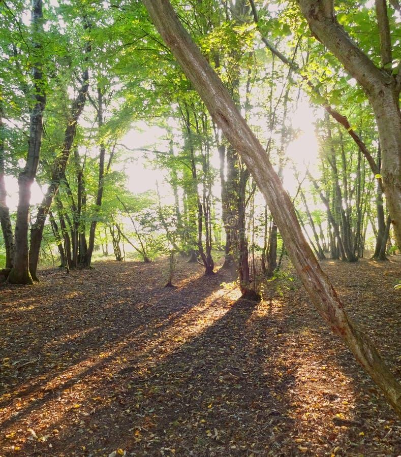 下午森林地阴影1 免版税图库摄影