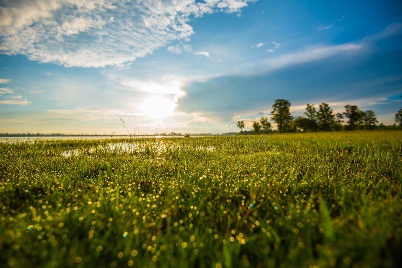 下午露水自然后草的草原 免版税图库摄影