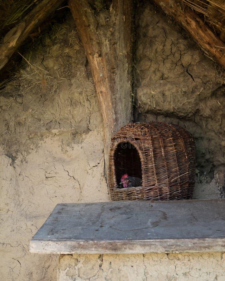 下在木巢的母鸡鸡蛋 免版税库存照片