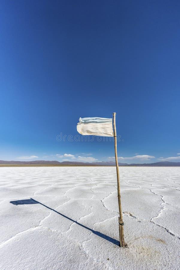下垂在盐沼Grandes在Jujuy,阿根廷。 免版税库存图片