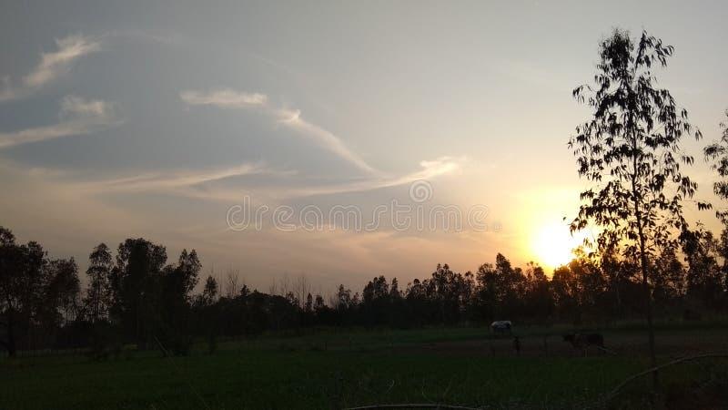 下垂的太阳和树 库存图片