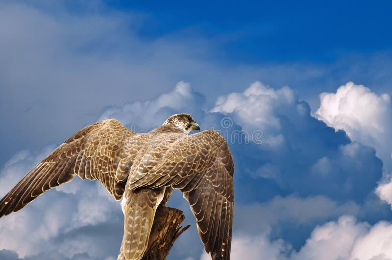 下抽象老鹰鹰天空 库存照片