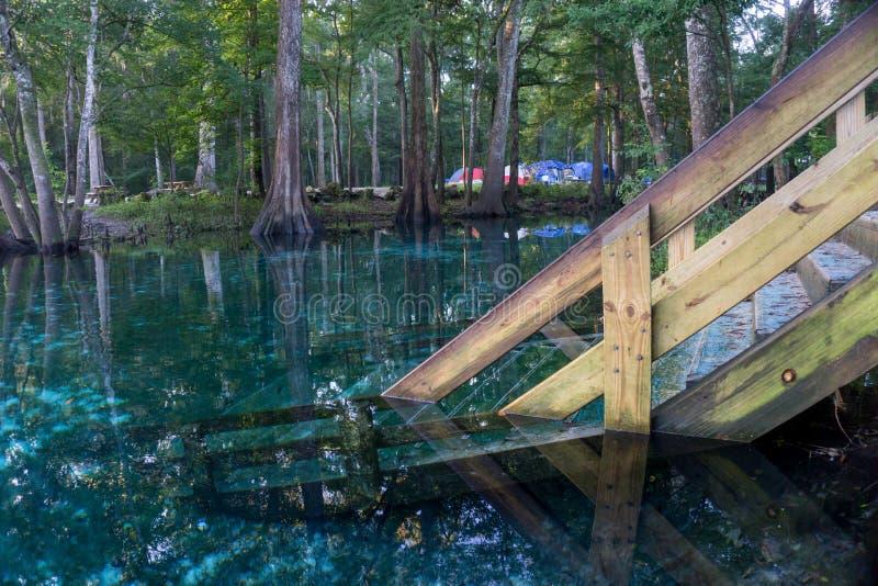 下来在水od Ginnie春天,佛罗里达的一个木楼梯的外形 赛普里斯森林在盐水湖 库存照片