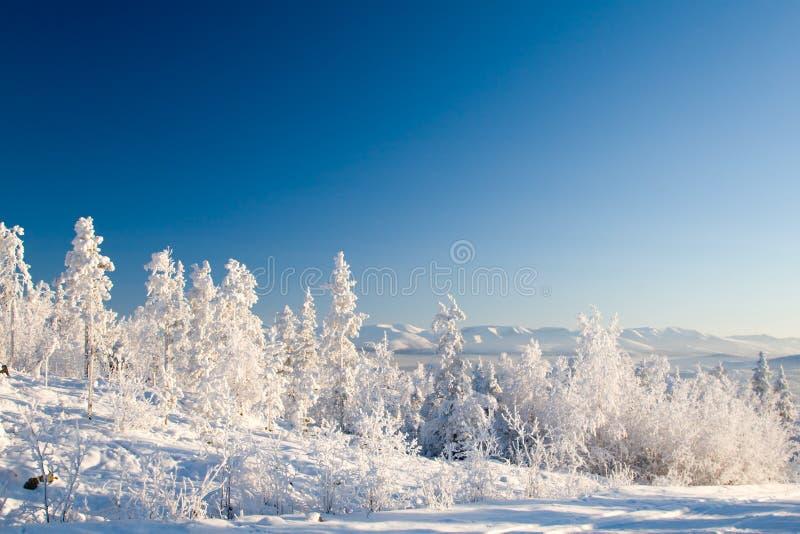 下来的森林frosen日落 免版税库存照片