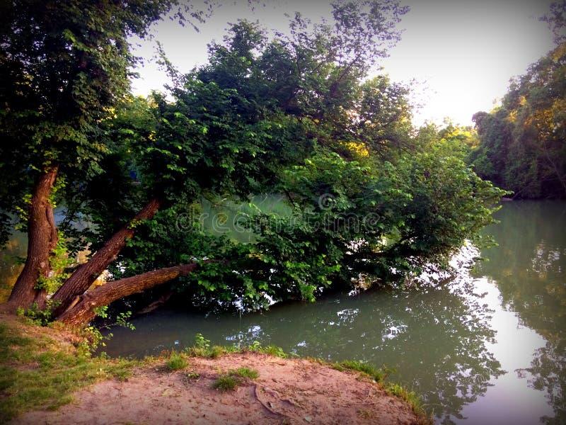 下沉的树在河 免版税图库摄影