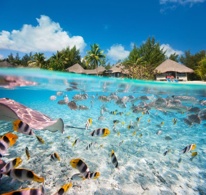 下热带海岛和水面上 免版税库存图片