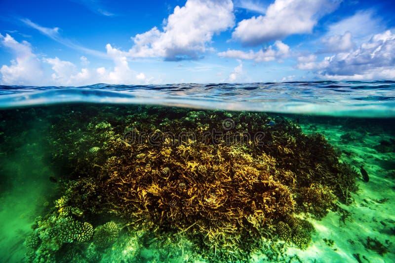 水下珊瑚的庭院 库存照片