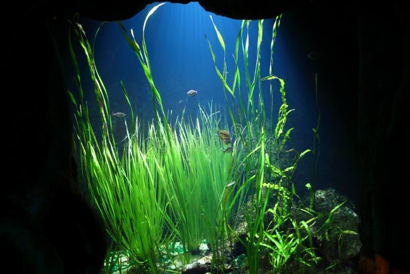水下的世界详细资料 图库摄影