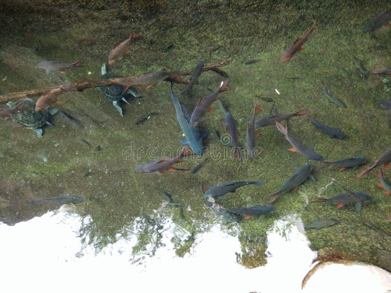 水下的动物 免版税库存照片