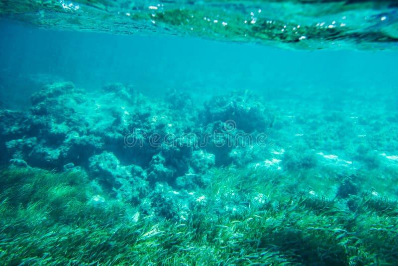 水下的海底礁石背景 库存图片