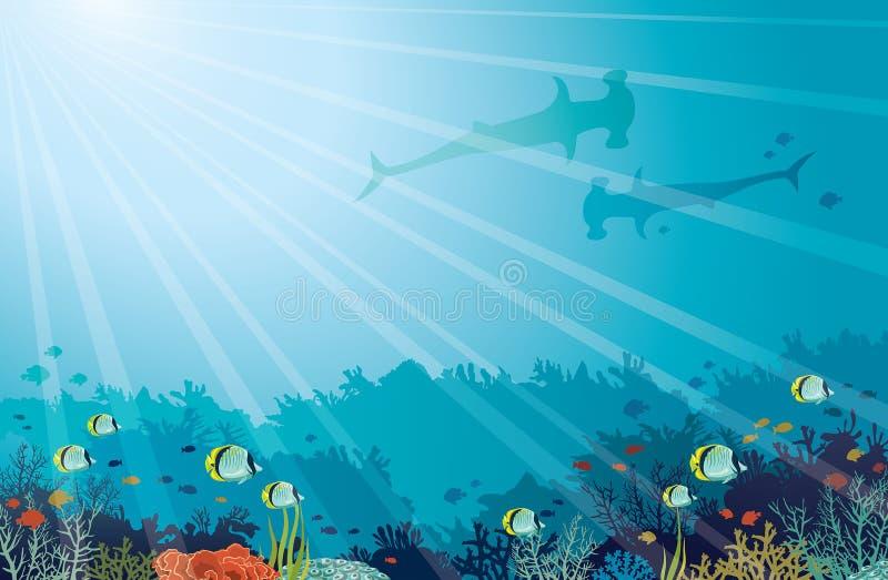水下的海Hummerhead鲨鱼,珊瑚礁,蝴蝶鱼 向量例证