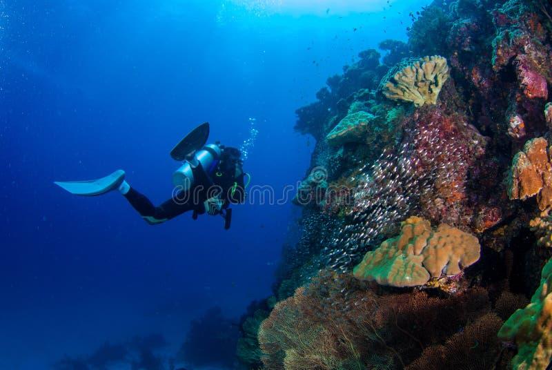 水下的潜水者 库存图片