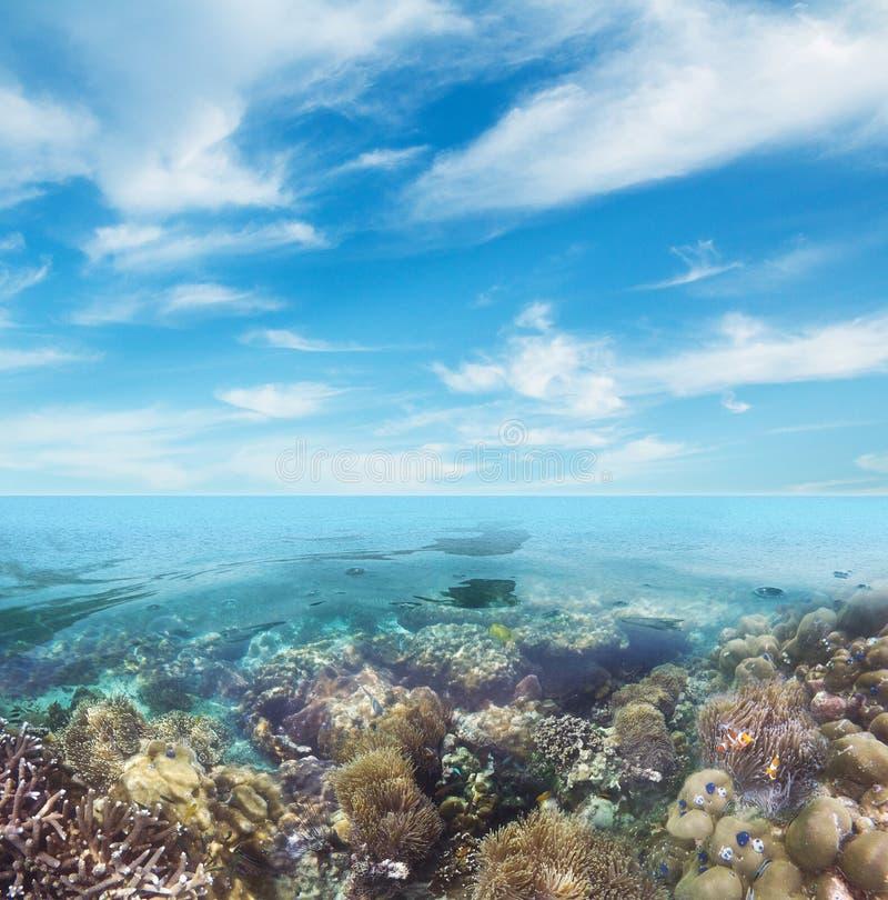 水下的珊瑚礁海底视图 免版税图库摄影