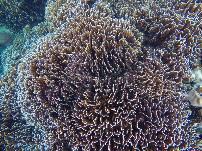 水下的珊瑚礁 免版税库存图片
