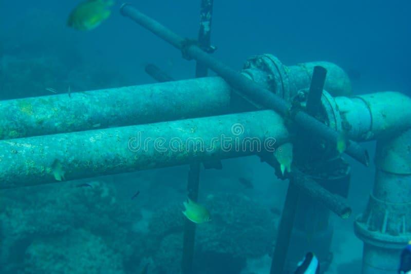 水下的管子在印度洋 库存照片