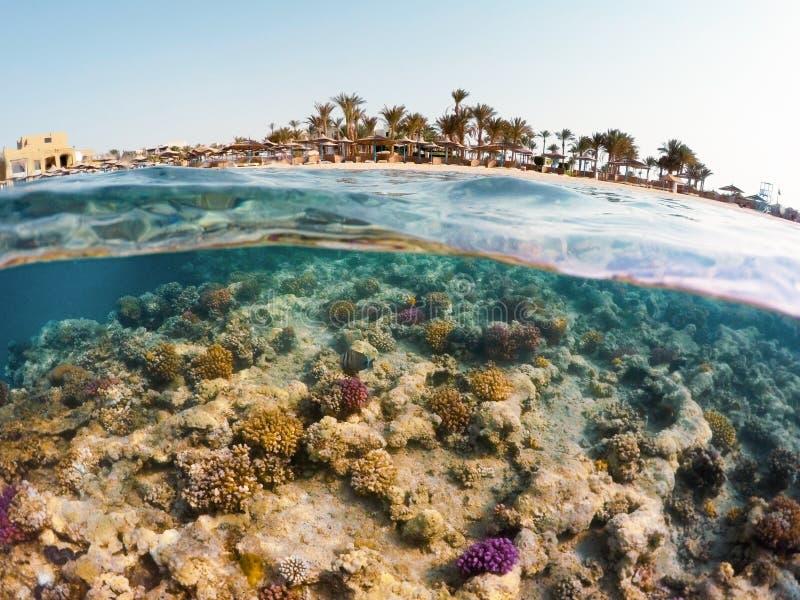 水下的表面分裂观点的珊瑚鱼和手段使机智靠岸 免版税图库摄影