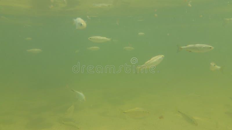 水下的鱼 免版税库存图片